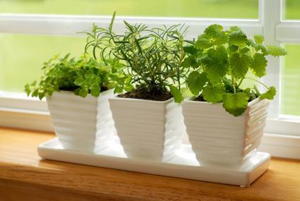 Houseplants: Thumbs-up to Indoor Plants - HousekeepingChannel.com